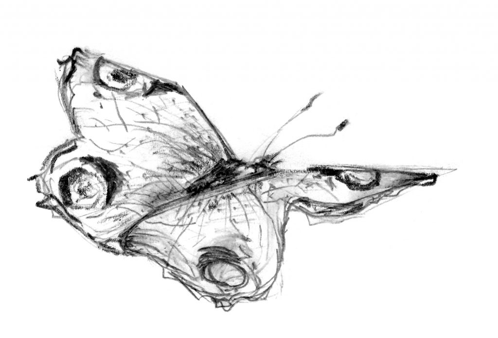 Illustratie vlinder voor een persoonlijk rouwkaart ontwerp